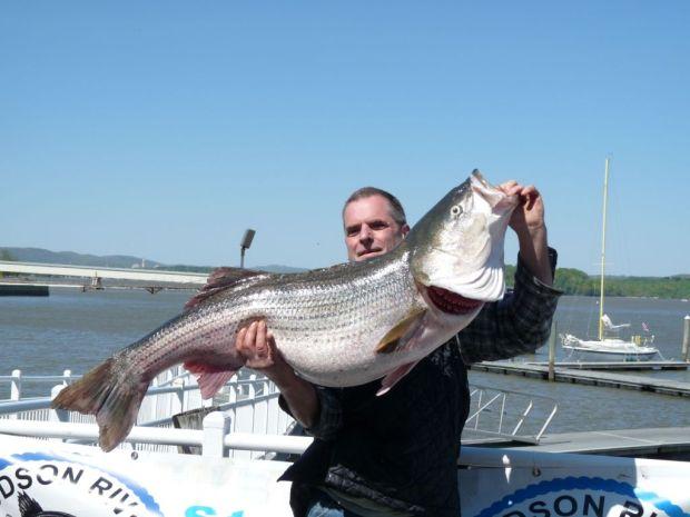 45lb striped bass ,Frank Green